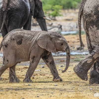 Elefantengruppe in namibia